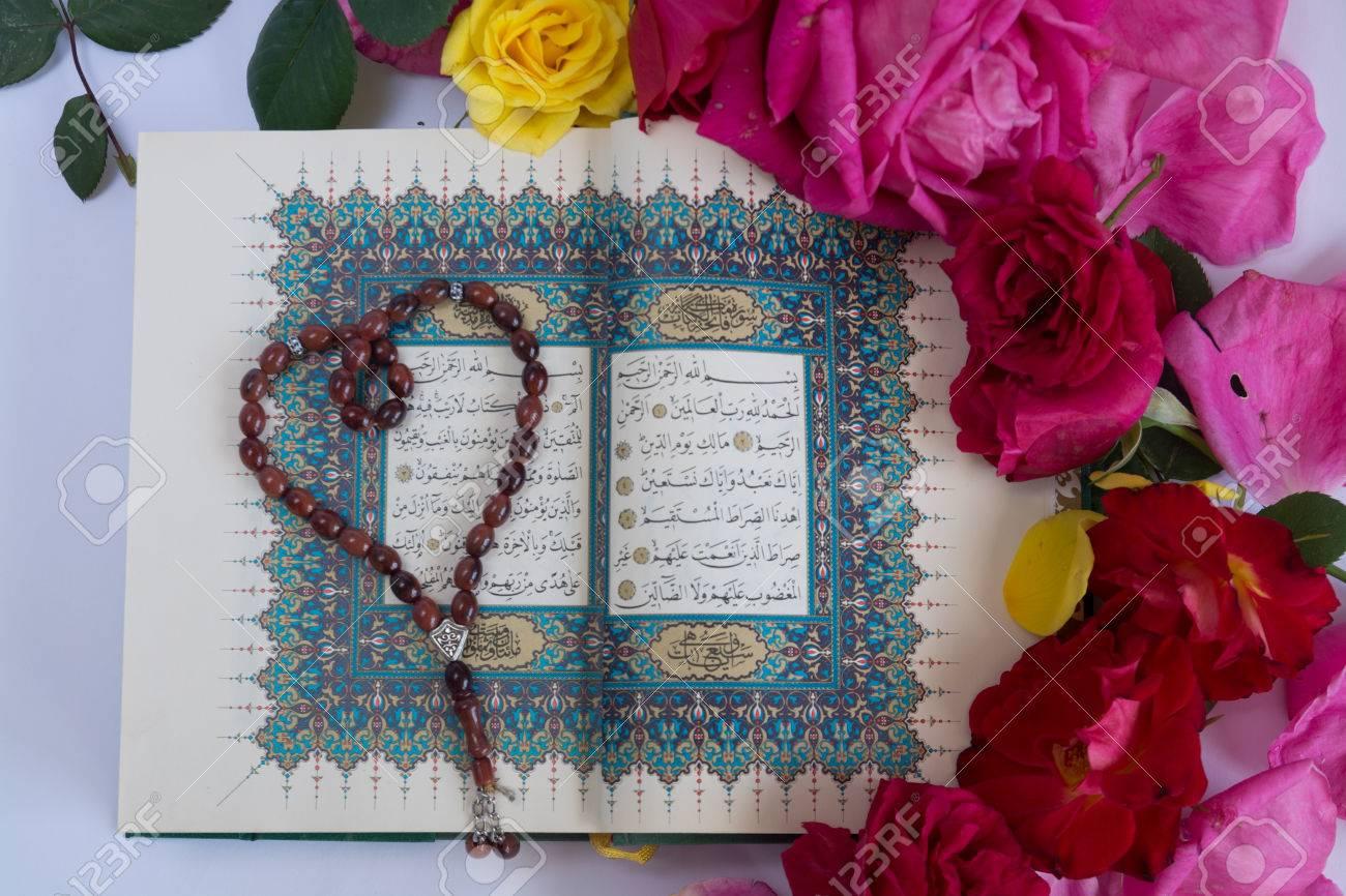 Sara Sharaf avatar